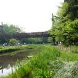 泉の森~つり橋~
