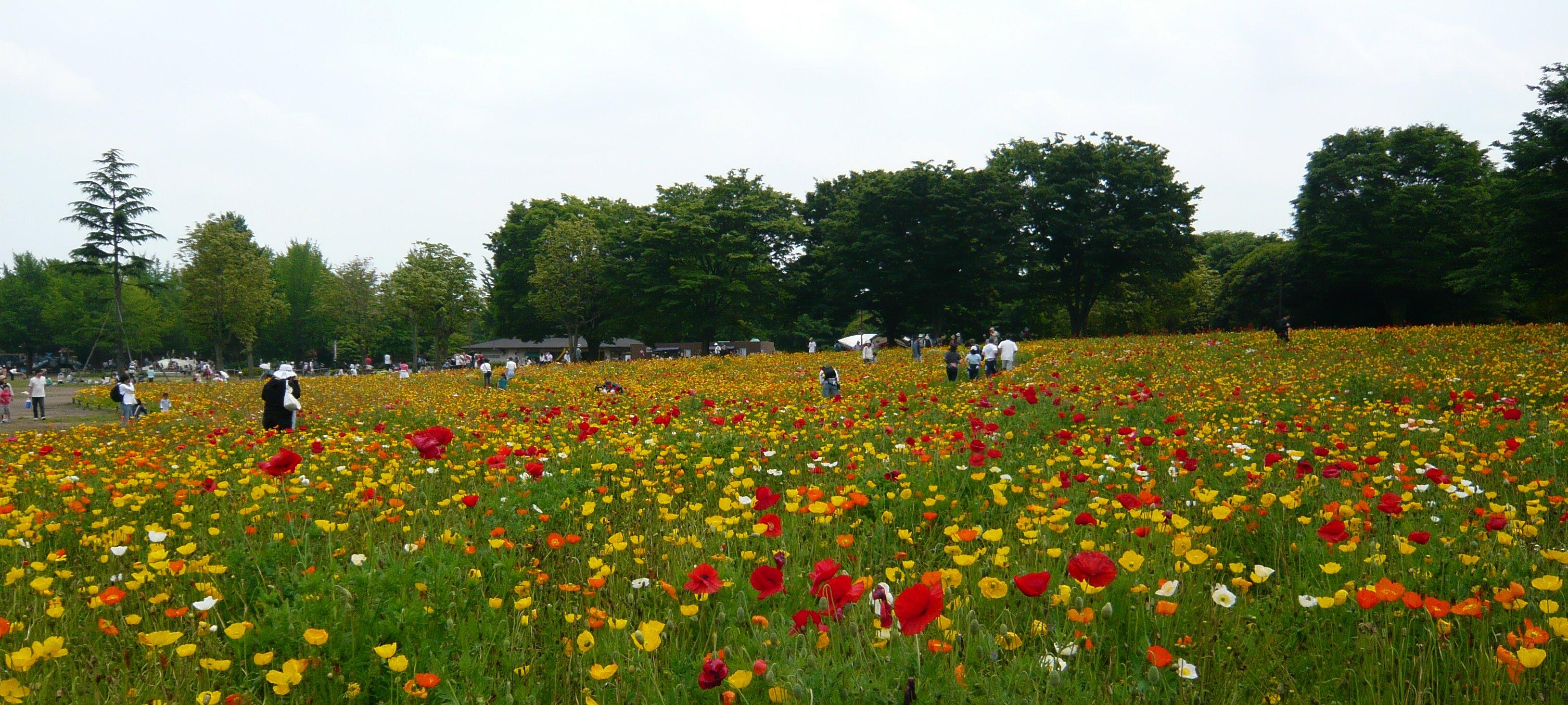 花畑~昭和記念公園にて~