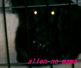 暗闇に光る怪獣の眼?